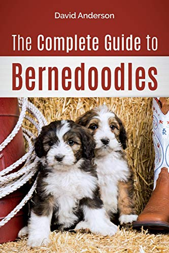 The Complete Guide to Bernedoodles: Everything you need to know to...