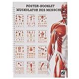 Sport-Tec Muskulatur des Menschen Mini-Poster Booklet Anatomie 34x24 cm, 12 Poster