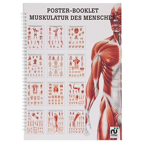 Muskulatur des Menschen Mini-Poster Booklet Anatomie 34x24 cm, 12 Poster