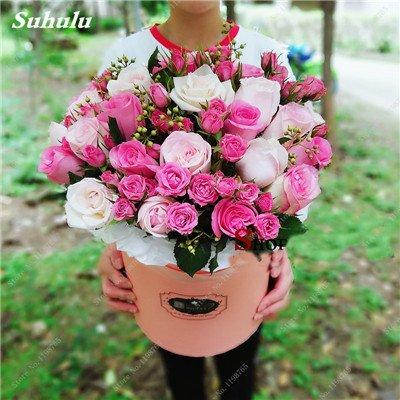 Mixed Seeds Rose, 200 Pcs Rare Bonsai Fleurs Rose, mélanger les couleurs Croissance naturelle Plante en pot pour le jardin Suppies Représentant Amour 12