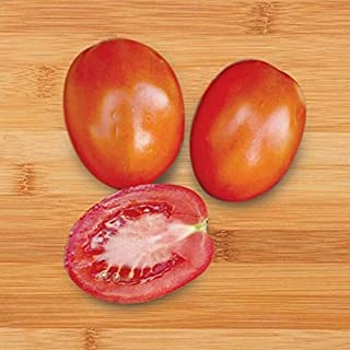50 - Seeds : Gumboe F1 Tomato Seeds-Very Productive Over Many Picks! Firm with Thick Flesh!!!