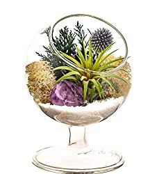 Bliss Gardens Air Plant Terrarium Kit - Best Terrarium Kits
