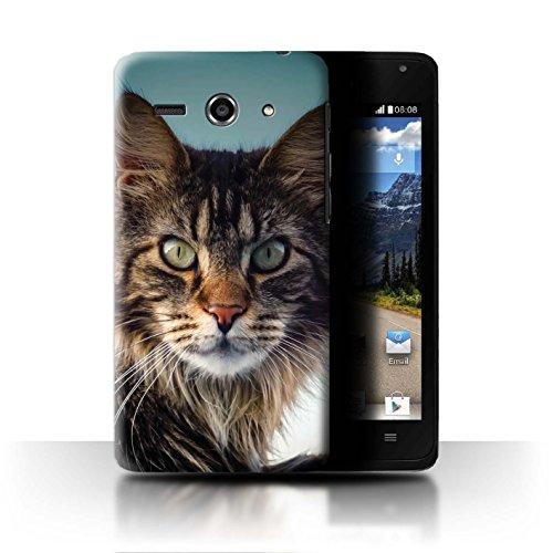 Stuff4 Hülle/Hülle für Huawei Ascend Y530 / Maine Coon Muster/Beliebte Katze/Katzenrassen Kollektion