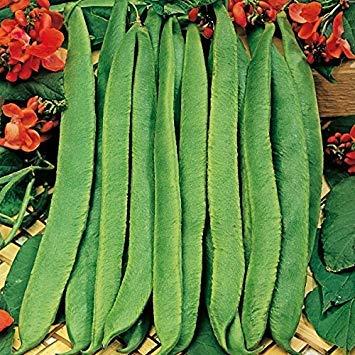Shop Meeko King Seeds - Bohnen - Feuerbohne Scarlet Emperor - 45 Samen