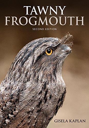 Pack de 1 Centurion Frogmouth transferencia caso