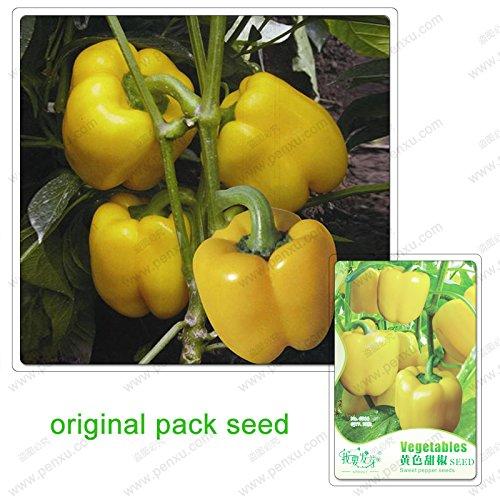10 graines/Pack, graines de poivron jaune, plante balcon jardin bonsaïs en pot poivre vert graines de légumes bio