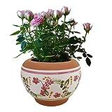 Vaso in terracotta dipinto a mano per fiori, orchidee, piante grasse e aromatiche, cactus e bonsai, Diametro 18 H15 cm, per esterno, interno e decorare il tuo giardino 🌷