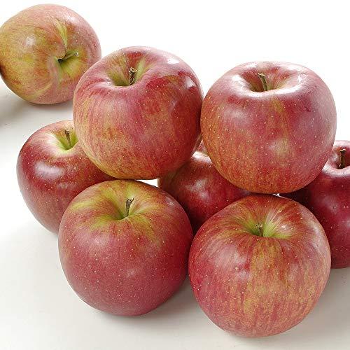 国華園 食品 りんご 青森産 大特価 シナノスイート 10kg