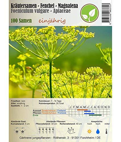 Kräutersamen - Fenchel/Foeniculum vulgare - verschiedene Sorten(Magnafena)