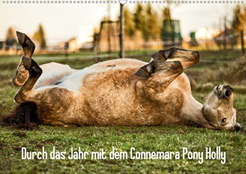 Durch das Jahr mit dem Connemara Pony Holly (Wandkalender 2021 DIN A2 quer)