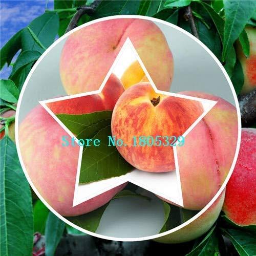 Bloom Green Co. GGG Enanos bonanza melocotones, Melocotonero - Semillas de durazno - Semillas de frutas semillas de bonsai - 1 pieza: Rojo