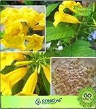 Pinkdose Angiosperme Subramanyakiretam Fleurs jaunes fleurs à planter des graines pour l'automne Angiosperme Graines semences