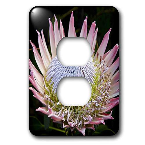 Einzelne Duplex-Wandplatte, Steckdosen-Wandplatte Blumen, Kirstenbosch Gärten, Südafrika-Af42 Rbe0058 Ralph H Bendjebar 2 Steckdosen Abdeckung