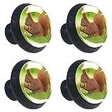 Oficina en el hogar Cocina Armario Happy Armario Herrajes Cajón Tirador Mango Ardilla linda de animales Avellana Puerta Gabinete Perillas para tocadores Cajones Vidrio