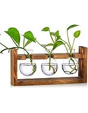Förökningsstation glödlampa vas glas ekollon vas för blommor terrarium burk planterare med träställ ställ hållare för gröna vattenväxter passar för hem köksbordet skrivbord inomhus dekor