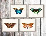 Wallbuddy Butterfly Print Set of 4 Butterfly Illustrations Great Occidental Butterfly Venus Moth Green Banded Tail Butterfly Sable Moth Butterfly Art (5 x 7)