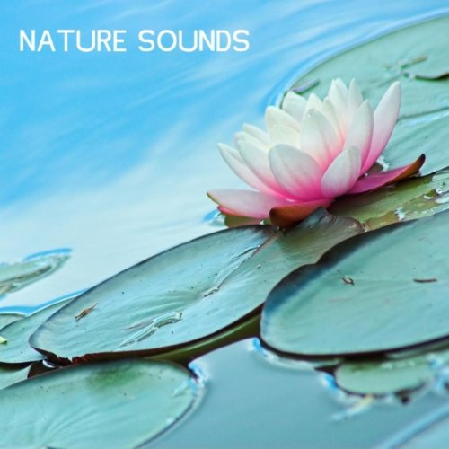 Ocean Sound with Instrumental Piano Music with Soothing