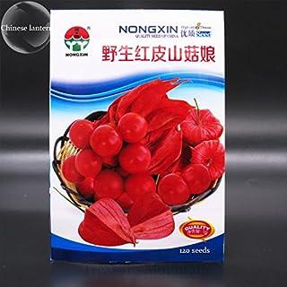 Rara Physalis alkekengi semillas rojas de la linterna china de vejiga cereza Medio fruta, paquete original, 120 semillas, cereza de invierno