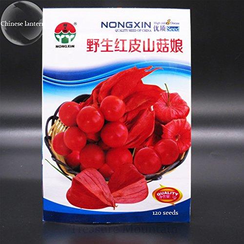 Rare Physalis alkekengi semi rossi lanterna cinese ciliegia della vescica Medio frutta, pacchetto originale, 120 Semi, alchechengi