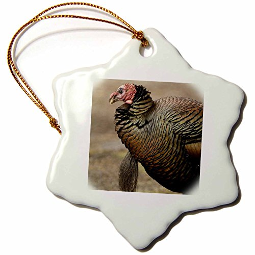 3dRose Wa, La Conner, Wild Turkey Bird-Us48 Tdr0048-Trish Drury Snowflake Ornament, Multi-Colour, 3-Inch