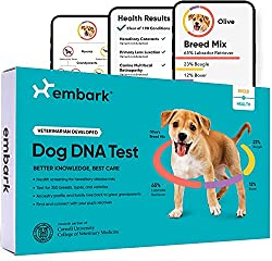 What is the Best Dog DNA Test? Dogsized