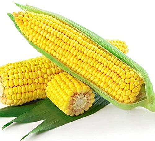 50 piezas de semillas de maíz cereales verdes naturales no transgénicos adecuados para la...