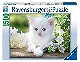 Ravensburger Italy- Puzzle 1500 Pezzi Gatto Bianco Gattino, Multicolore, 16243 7