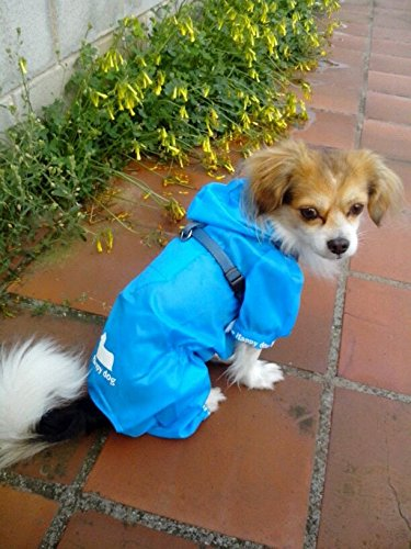 Pluie chien XL