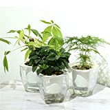 FENGZHITAO Self Watering Pots