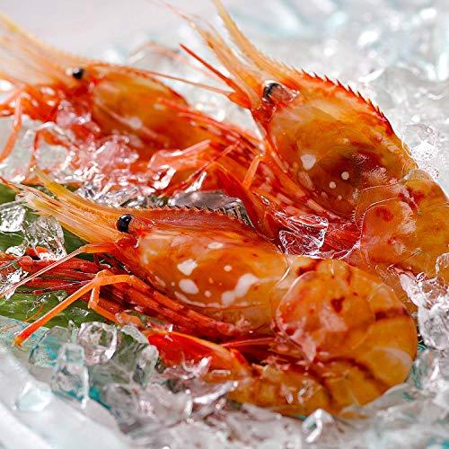 ボタンエビ 天然 特大 生ぼたんえび お刺身 お寿司 海鮮丼 (500g 15-20尾 通常)