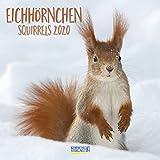 Eichhörnchen 2020: Broschürenkalender mit Ferienterminen. Format: 30 x 30 cm