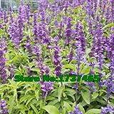 FERRY Semences Germination Seulement Pas Les Plantes: Immobilier 200pcs / lot Chia, hispanica, Poids bonsaï Perte...