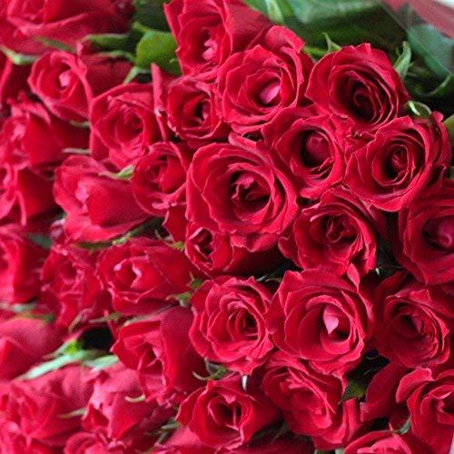 BISESFLOWER(ビズフラワー)『バラ60本かすみ草付きの花束』