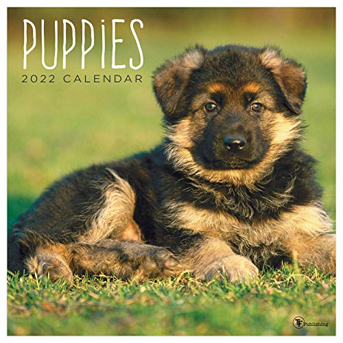 TF PUBLISHING - 2022 Puppies Wall Calendar - Home and Office Organizer - Large Monthly Grid for Planning and Schedules - 4 Bonus Months - 12'x12'