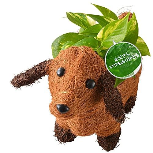 花のギフト社 父の日 わんわんバスケット ポトス 鉢植え 父の日 3号ポット スタンプ付 観葉植物