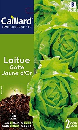 Caillard PFCC12902 Graines de Laitue Gotte Jaune d'Or