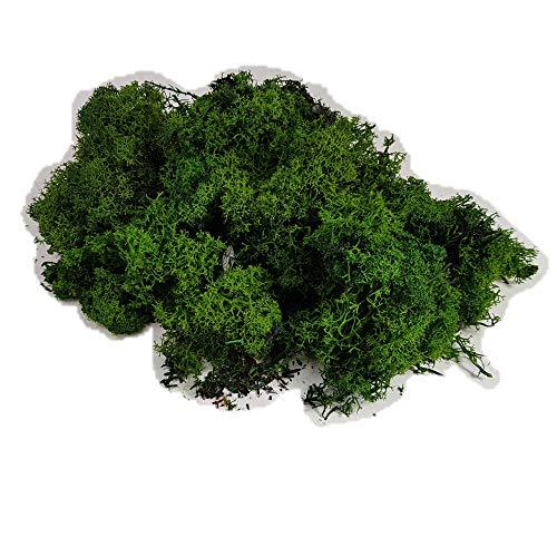 INCARTAMI-ITALIA Secco Muschio Nordico LICHENE Verde Abete 500 Grammi