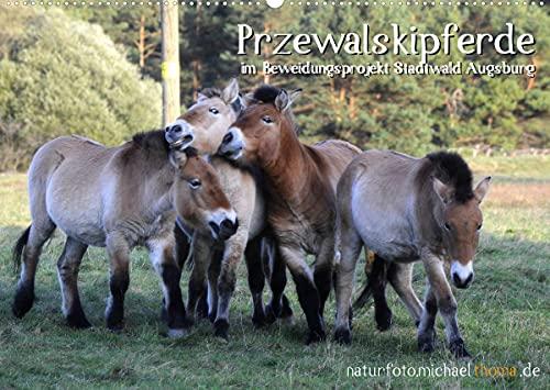 Przewalskipferde (Wandkalender 2022 DIN A2 quer)