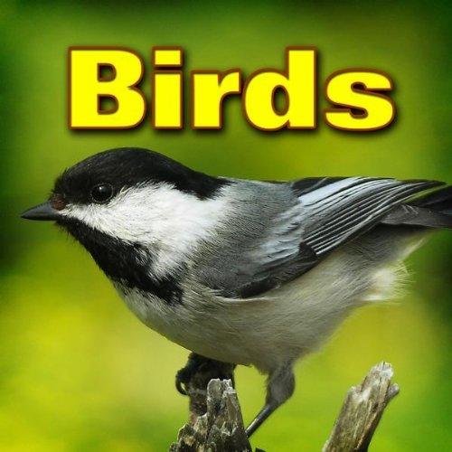 Gold Finch Chirping
