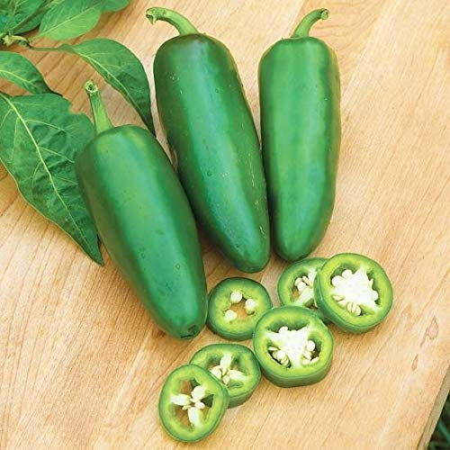 20x Semillas de Chile Jalapeño - Cultive Sus Propios Chile Jalapeño