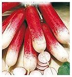 Inception Pro Infinite 600 C.ca Semi Ravanello Mezzo Lungo Rosso A Punta Bianca 2 - Raphanus sativus In Confezione Originale Prodotto in Italia - Ravanelli lunghi