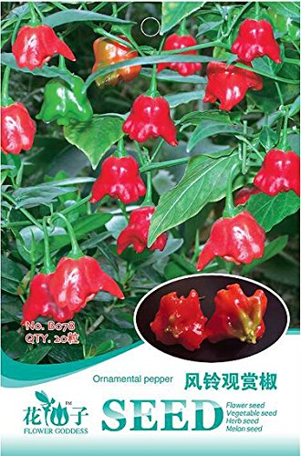 Graines Couronne Chili Pepper Red Bishop, original Paquet, 20 graines / Pack, Rare Trinidad UFO Peppers B078 comestibles