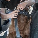 Sicherheitsgurt Hund ausziehbar / Auto Sicherheitsgeschirr für mittlere und große Hunde / Hunde Anschnallgurt - 4