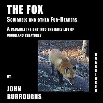 The Fox (Unabridged), a valuable insight into the daily life of woodland creatures, by John Burroughs