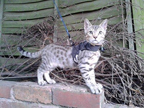 Mynwood Cat Jacke /Geschirre Arctic Kampf Kätzchen bis zu 8 Monate - ausbruchsicher