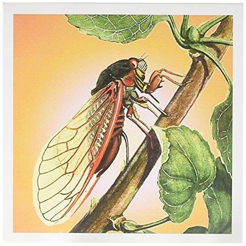 3drose Zikade – cikade, cikaden, magicicicada septendecim, insecten, insecten, bugs, gevlochten insecten – wenskaarten, 15,2 x 15,2 cm, set 12 (GC-schakelaar, Valencia, 2)
