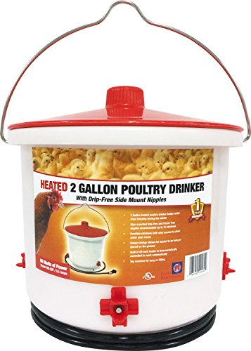 Farm Innovators HB-60P Heated Poultry Drinker, 2-Gallons - Quantity 4