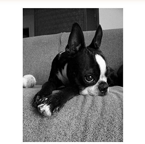 WLYUE Puzzle 1000 Piezas para Adultos Juegos Perro en el Sofa Regalo para niño Puzzle decoración Rompecabezas
