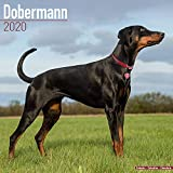 Avonside Publishing Ltd: Dobermann Calendar 2020