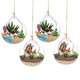 Hanging Glass Globes Terrarium Succulents Orbs 4 Pcs Glass Planter Big Opening Air Fern Plants Vase Hanger 4 Inches for Home Party Wedding Garden DIY Design